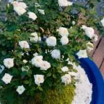 盆栽のブログで収入を得る