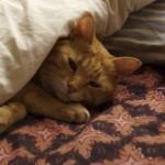 猫と布団-在宅ライター日記