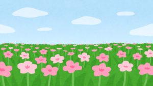 東京ドイツ村のお花畑